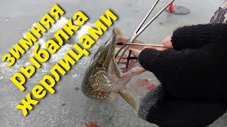 ПОСТАВИЛ ЖЕРЛИЦЫ И ПОНЕСЛАСЬ ЩУКА НА ЖИВЦА Зимняя рыбалка на щуку жерлицами