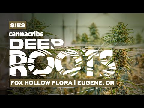 award-winning-craft-cannabis-|-fox-hollow-flora-in-eugene,-oregon