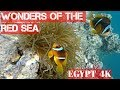 Red Sea's Underwater World at Port Ghalib- Marsa Alam - EGYPT 4K 2018