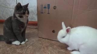 Реакция кошки на появление в доме кролика.
