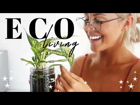 3 SIMPLE WAYS TO BECOME MORE ECO FRIENDLY DAILY!  – VLOG