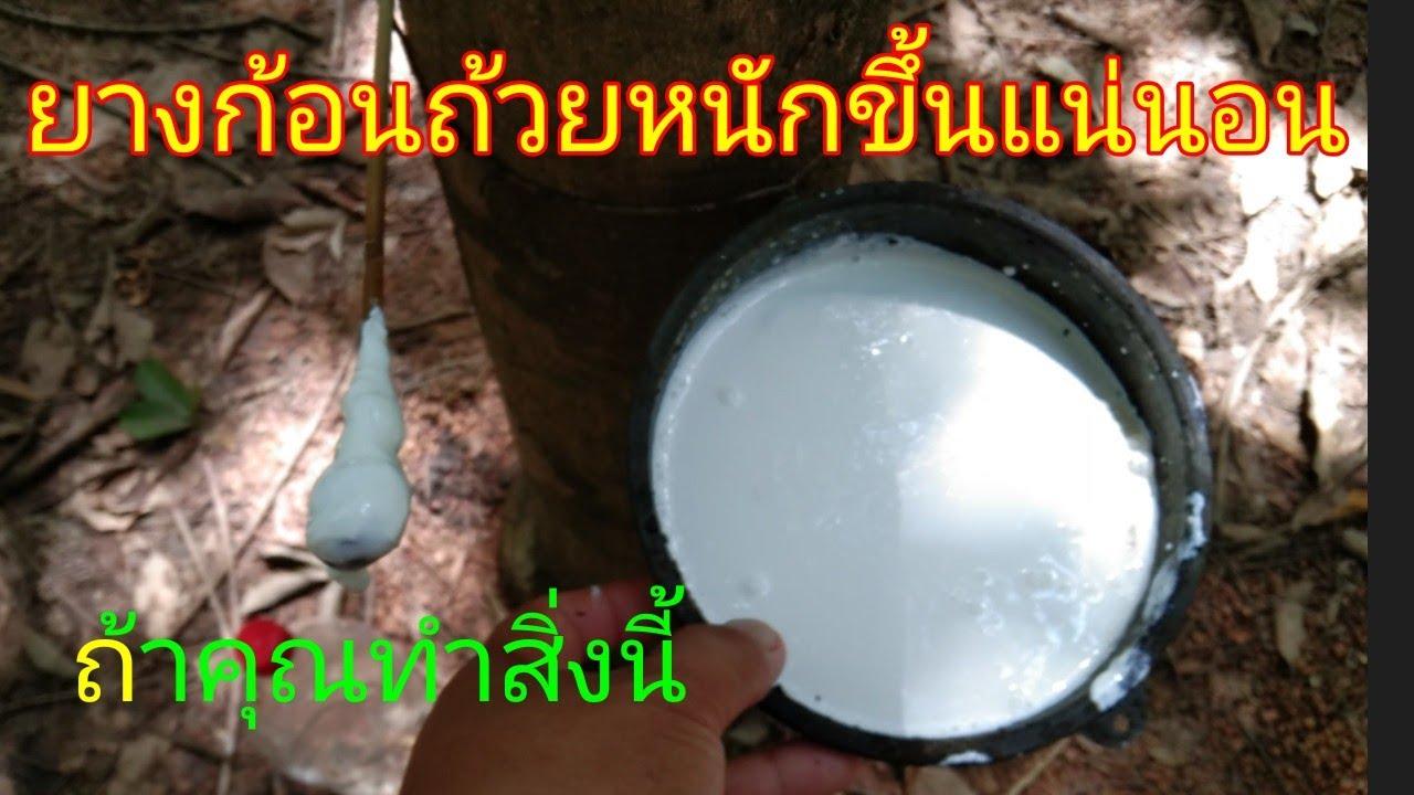 ยางก้อนถ้วย หนักขึ้นแน่นอน (แค่คุณทำสิ่งนี้) มือใหม่ไม่ควรพลาด