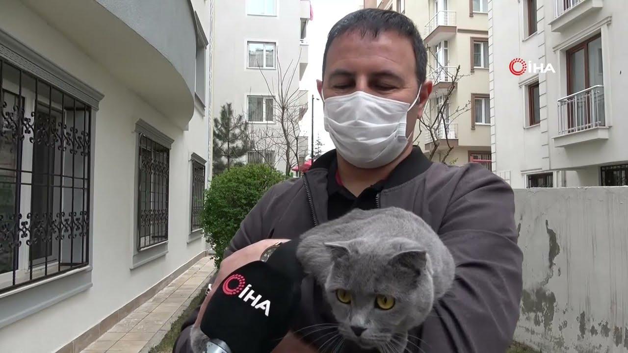 Sevimli Kedi 4  Kattan Dört Ayak Üstüne Düştü