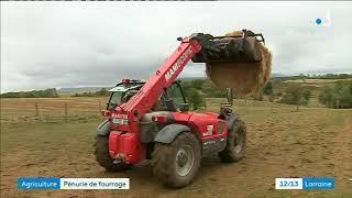 Conséquences de la sécheresse dans les Vosges