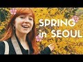 A Week of Spring in Seoul, Korea Vlog (Cherry Blossoms, Street Food, and More)