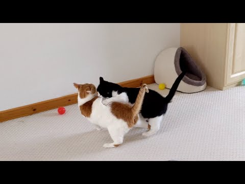 Cat Fight   4K
