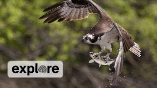 Osprey Cam Maintenance April 2014