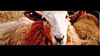 Wolle. Ein Blick hinter die Kulissen der Wollindustrie