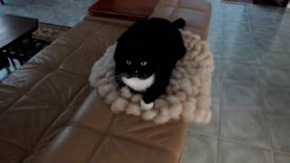 Cat is enjoying wool cloud rug by FeltSoapGood