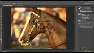 7 - تعرف على الصورة الرقمية ( دورة فوتوشوب  Photosop CS6 )