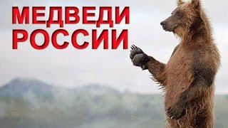 Медведи России  Документальный фильм 2015