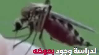 حقيقية انتشار مرض الملاريا في ليبيا 😷