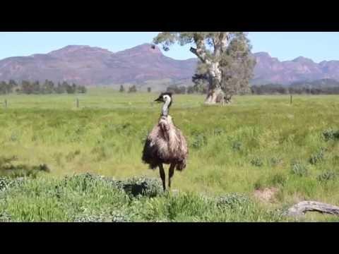 FLINDERS RANGES National Park - Discover the Park