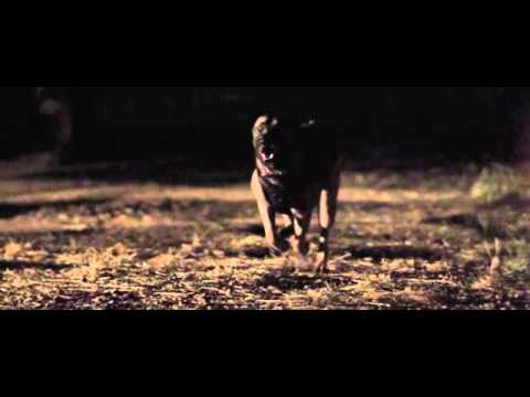 Warrior Dog Foundation Flagship Video SD