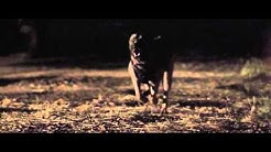 Warrior Dog Foundation Flagship Video SD