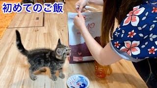 初めてのご飯が美味しすぎて涙を流してしまった子猫w