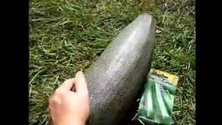 видео Как собирать и хранить семена, чтобы получить хороший урожай