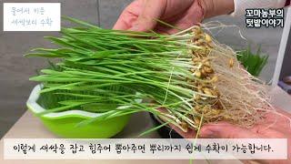 새싹보리 수확해 먹는방법:: 토경재배vs수경재배:: h…
