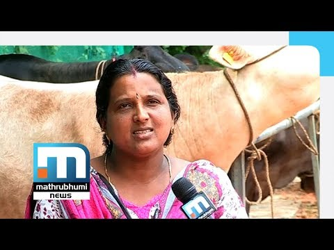 Udayasree And Her Cattle Farm| Mathrubhumi News