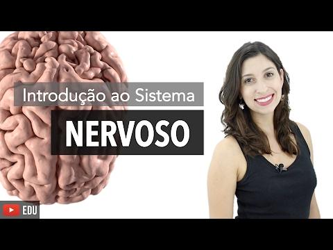 Sistema Nervoso 1/6: Introdução | Anatomia E Etc.