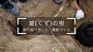 葛の根【尼崎の森中央緑地】
