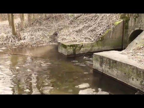 Sounds of Nature vol.2