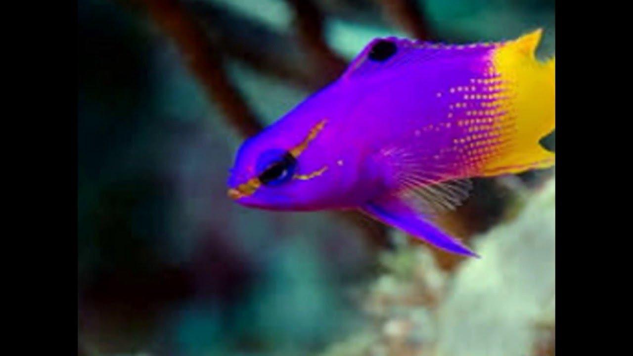 Beautiful Fishes For Home Aquarium Youtube