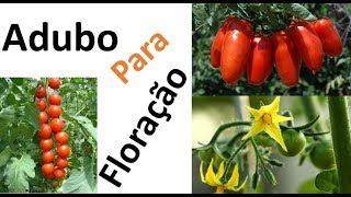 Tomates: Adubação para Segurar a Florada e mais Dicas Contra Nematoides