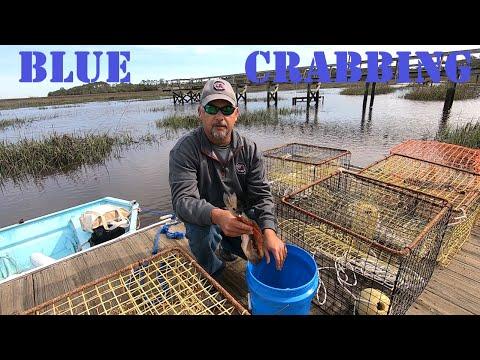 Blue Crab Crabbing With Crab Pots ( Bait, Set, Pull )