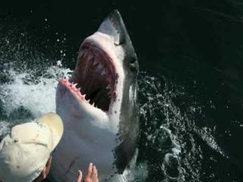 Incredible Shark Human Love Story Aussie Fisherman Youtube