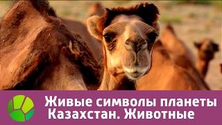 Живые символы планеты. Казахстан. Животные | Живая Планета