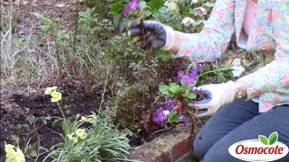 How to Replant Primroses in Deep Shade