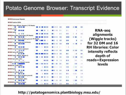 Potato Genomics: What's Next? Full Recording