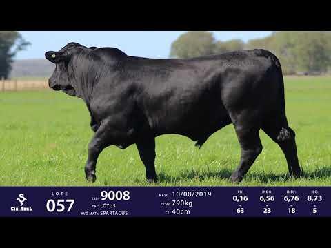 LOTE 57 - TAT 9008