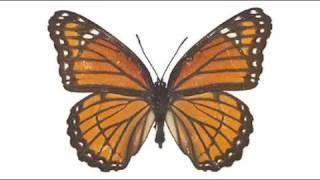 Papillon By Union Jack. Platipus Records 2009