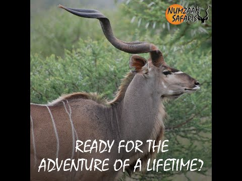 south-africa-adventure-with-numzaan-safaris