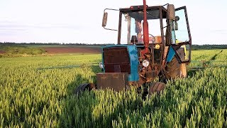 К чему пришли по пшенице.  Выращивание пшеницы, наши Эксперименты. #СельхозТехника ТВ