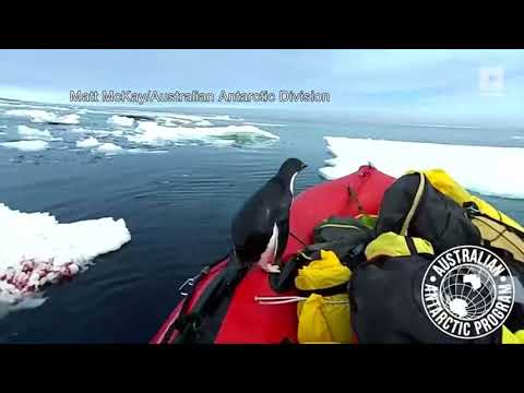 Watch This Penguin Surprise Researchers on an Antarctic Research Boat