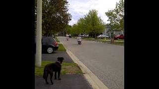 two fat guys on bikes