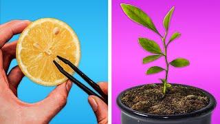 HOW TO GROW A LEMON TREE    REGROWING HACKS FOR YOUR PLANTS!