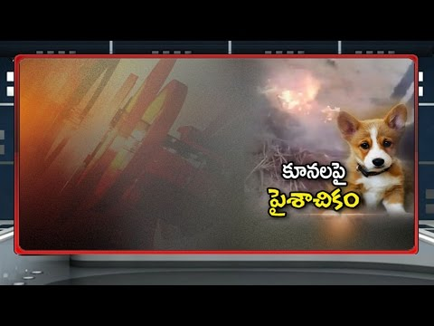 Shocking Video: Boys Throwing Puppies Into Fire in Hyderabad || NTV