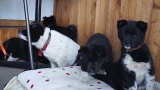 5月1日 約2ヶ月の5匹の懐こい子犬を保護(父:飼い犬 母:野犬) 人馴...