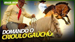 DOMANDO O CRIOULO GAÚCHO!   RICHARD RASMUSSEN