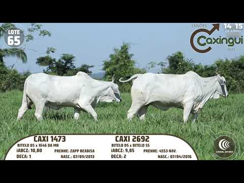 LOTE 65   CAXI 1473, CAXI 2692