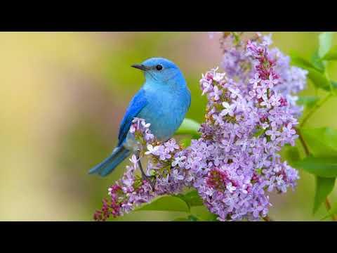 Весняні зміни в природі