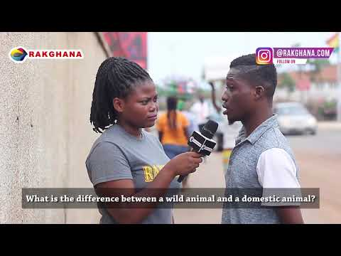 WHAT IS THE DIFFERENCE BETWEEN A WILD ANIMAL AND A DOMESTIC ANIMAL? (Rak Ghana Street Quiz)