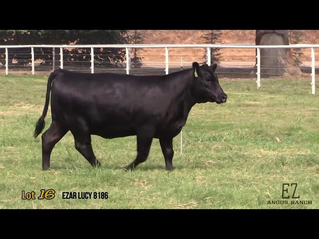 EZ Angus Ranch Lot 16