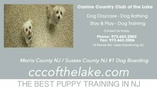 Puppy Training Sparta Nj