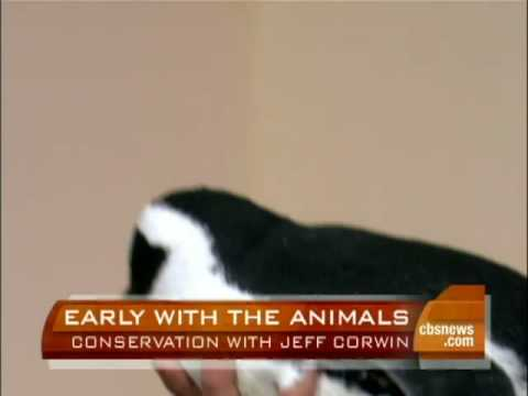 Jeff Corwin On Conservation