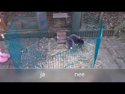 Yes or No challenge met de konijnen!! -Bunny tv- #3